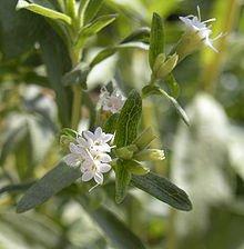 Vitamineshakes gezoet met stevia